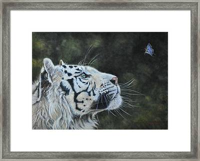 The White Tiger And The Butterfly Framed Print by Louise Charles-Saarikoski
