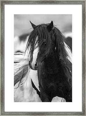 The Wild One Framed Print by Sandy Sisti