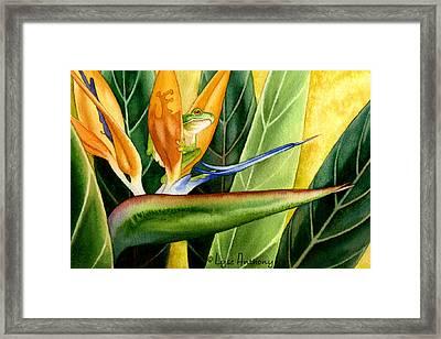 The Windsurfer Framed Print by Lyse Anthony