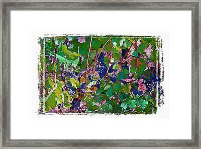 The Wine Maker II Framed Print by Ken Evans