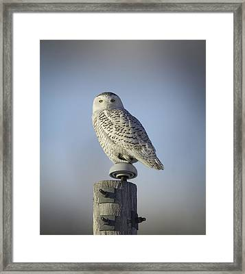 The Wise Snowy Owl Framed Print by Thomas Young