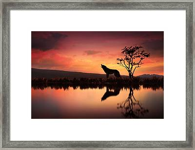 The Wolf At Sunset Framed Print by Jennifer Woodward