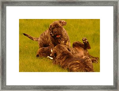 The Wrestling Match Framed Print by Jeff Swan