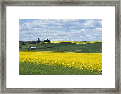 The Year Of Canola Framed Print by Latah Trail Foundation