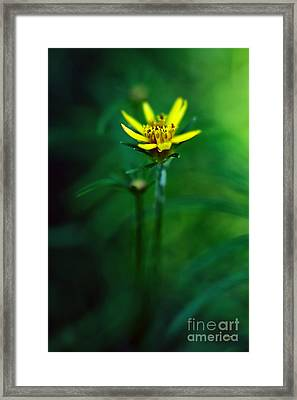 There's A Secret World Framed Print by Lois Bryan