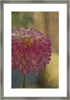 There's Always Next Year Framed Print by Trish Tritz