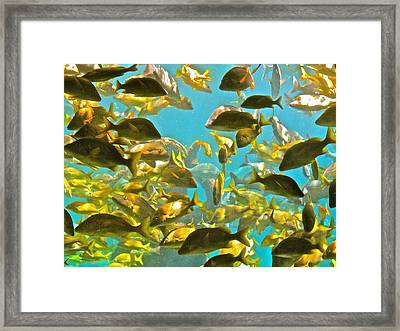 Theres Plenty Of Fish In The Sea Framed Print by Amanda Just