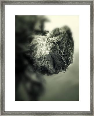 Thirst Framed Print by Jessica Jenney