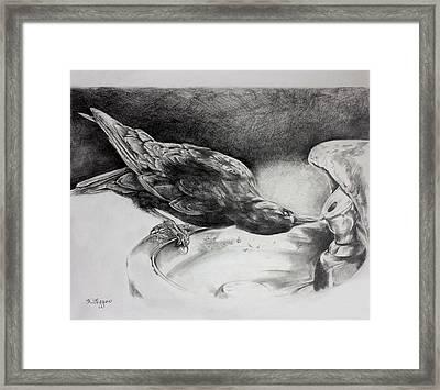 Thirsty Crow Framed Print by Derrick Higgins