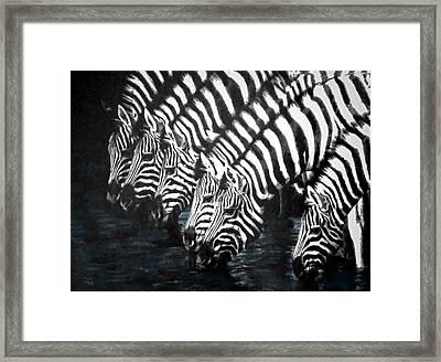 Thirsty Zebras  Framed Print by Sandi OReilly