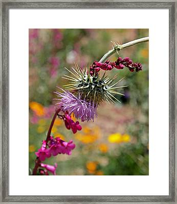 Thistle And Penstemon Framed Print by Rona Black