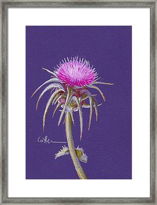 Thistle Framed Print by Diane Cutter