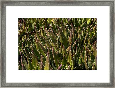 Thorns On Succulent Framed Print by Garry Gay