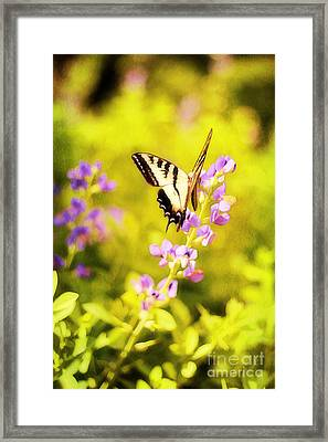 Those Summer Dreams Framed Print by Darren Fisher