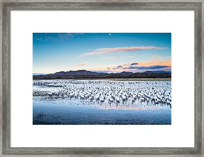 Snow Geese And Sandhill Cranes Before The Sunrise Flight - Bosque Del Apache, New Mexico Framed Print by Ellie Teramoto