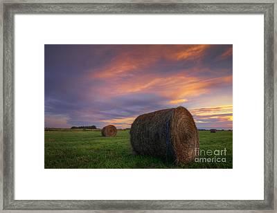 Three Bales Framed Print by Dan Jurak