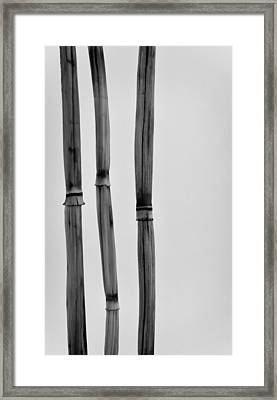 Three Bamboo Stalks Framed Print by Don Schwartz