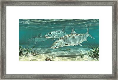 Three Bonefish And Crabs Framed Print by Don  Ray