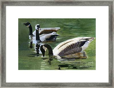Three Canada Geese Framed Print by Sharon Freeman