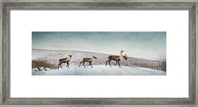 Three Caribous Framed Print by Priska Wettstein
