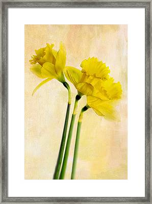 Three Dafs Framed Print by Rebecca Cozart