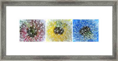Three Dandelions In A Line Framed Print by Kaye Menner