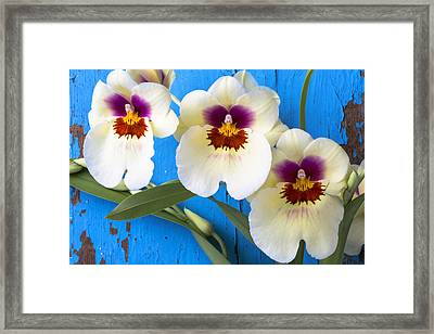 Three Exotic Orchids Framed Print by Garry Gay
