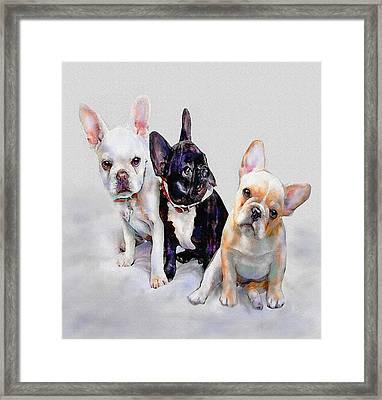 Three Frenchie Puppies Framed Print by Jane Schnetlage