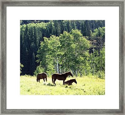 Three Horses Framed Print by Gerry Bates
