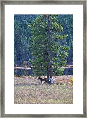Three Horses Under A Pine Tree Digital Oil Painting Framed Print by Sharon Talson