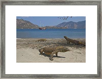 Three Komodo Dragons On Beach Framed Print by Jaynes Gallery