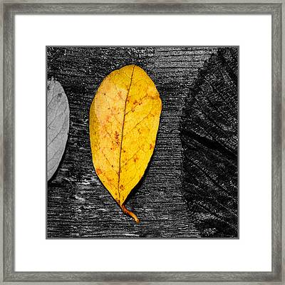 Three Leaves On Wood Texture Framed Print by Toppart Sweden