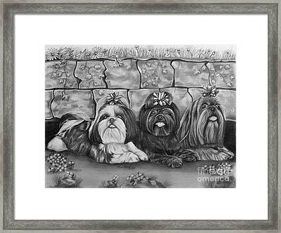 Three Little Shih Tzus Framed Print by Lena Auxier