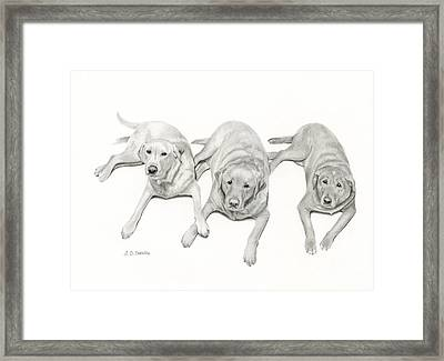 Three Of A Kind Framed Print by Sarah Batalka