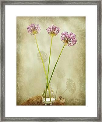 Three Onion Globes Framed Print by Chris Berry