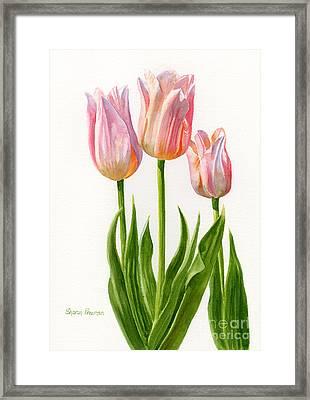 Three Peach Colored Tulips Framed Print by Sharon Freeman