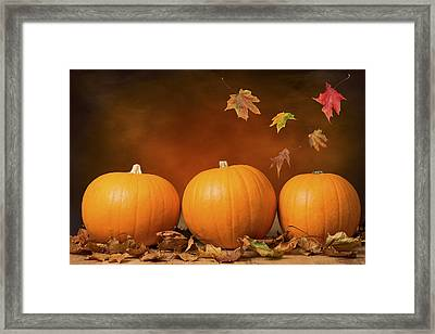 Three Pumpkins Framed Print by Amanda Elwell