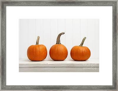 Three Pumpkins Framed Print by Elena Elisseeva