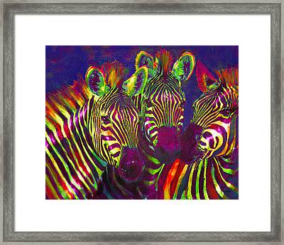 Three Rainbow Zebras Framed Print by Jane Schnetlage