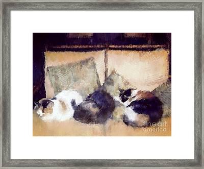 Three Sleeping Cats Framed Print by Nicola Andrews