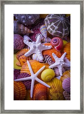 Three Starfish Framed Print by Garry Gay