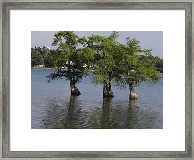 Three Trees Framed Print by Cim Paddock