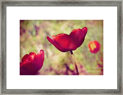 Three Tulips Framed Print by Silvia Ganora