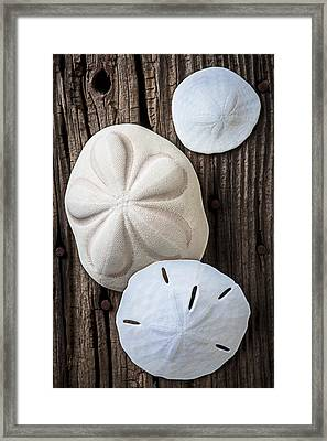 Three Types Of Sand Dollars Framed Print by Garry Gay