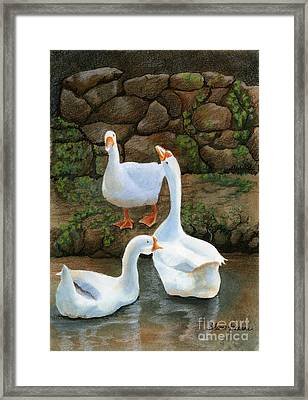 Three White Ducks Framed Print by Sharon Freeman