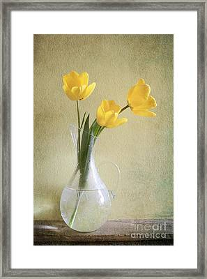 Three Yellow Tulips Framed Print by Diana Kraleva