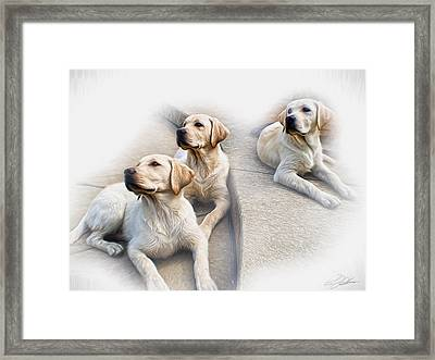 Three's Company Framed Print by Peter Chilelli