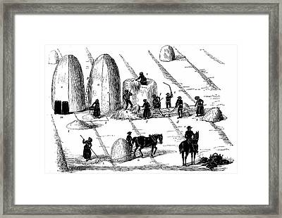 Threshing Rye Grass For Seed Framed Print by Universal History Archive/uig