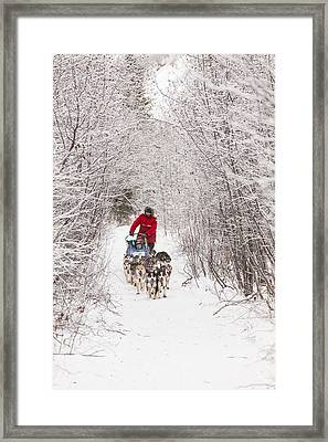 Through A Tunnel Of Snowy Trees Framed Print by Tim Grams