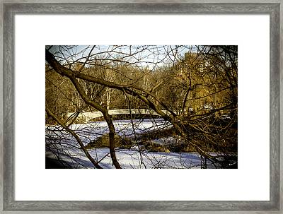 Through The Branches 2 - Central Park - Nyc Framed Print by Madeline Ellis